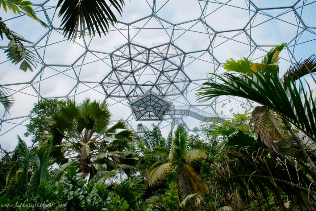 Cornwall: Eden Project Rainforest biome lookout balcony