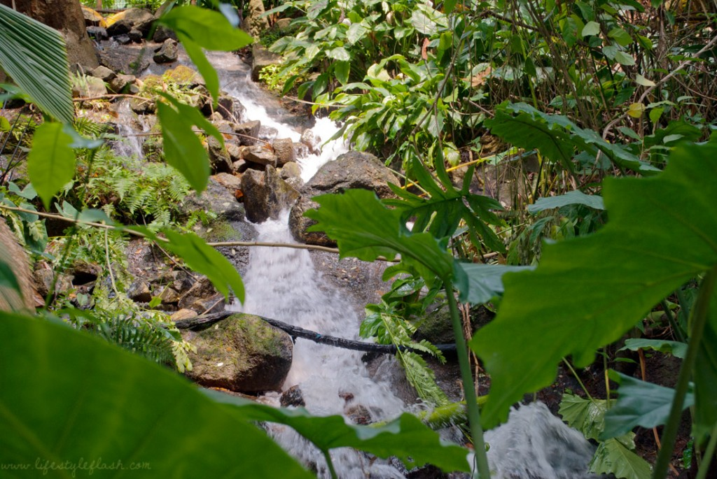 Cornwall: Eden Project Rainforest biome waterfall