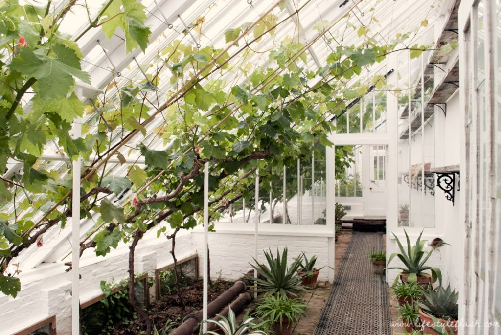 Lost Gardens of Heligan: greenhouse