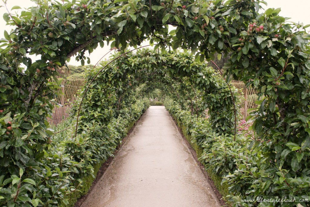 Lost Gardens of Heligan: apple arches