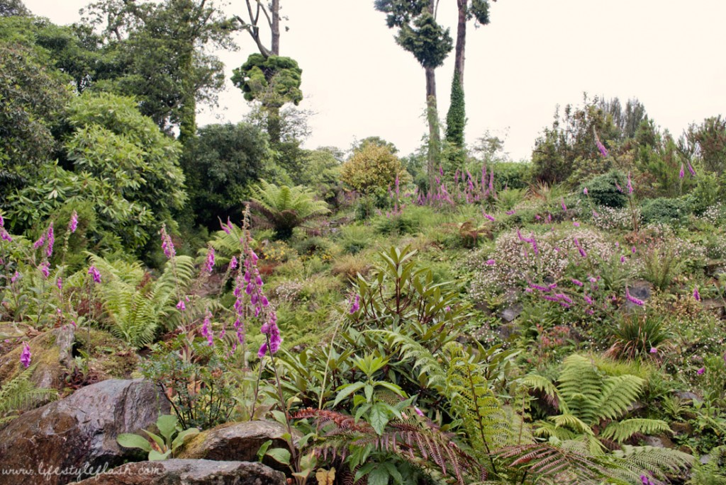 Lost Gardens of Heligan: jungle ravine
