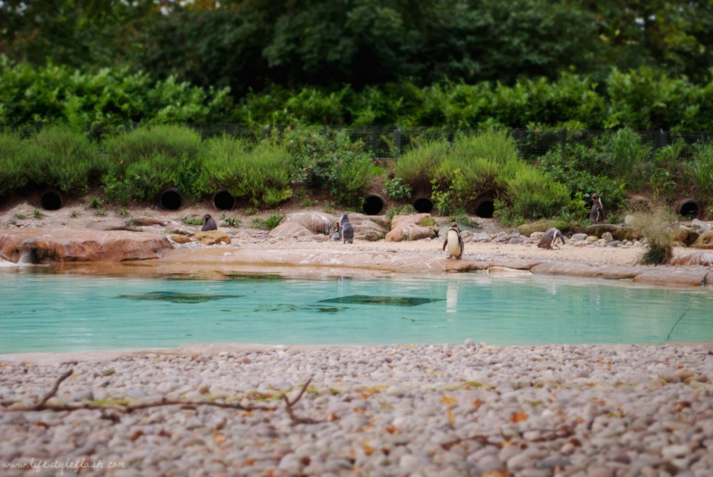 London Zoo Lates | Penguin Beach