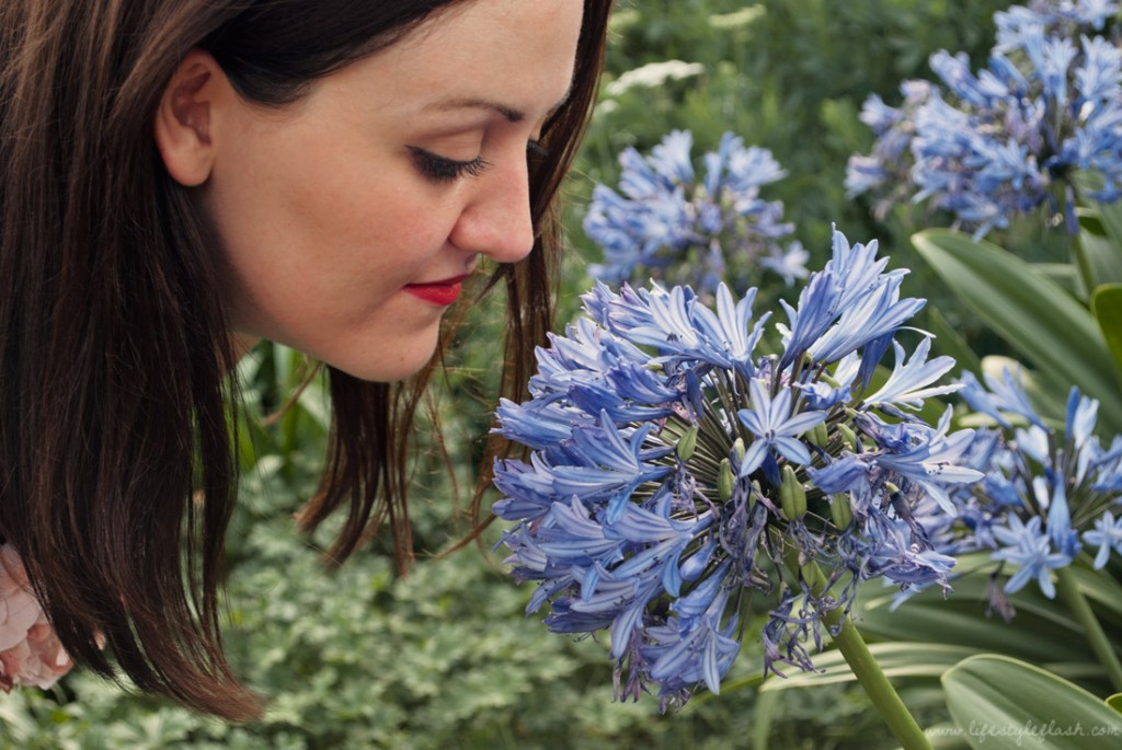 Smelling Agapanthus Praecox 'Giganteus' (African Lily) flower in the Walled Garden at Kew