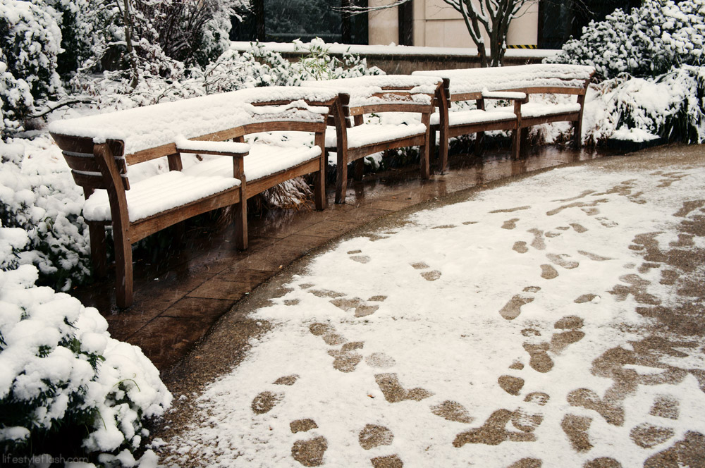 London park benches in the snow