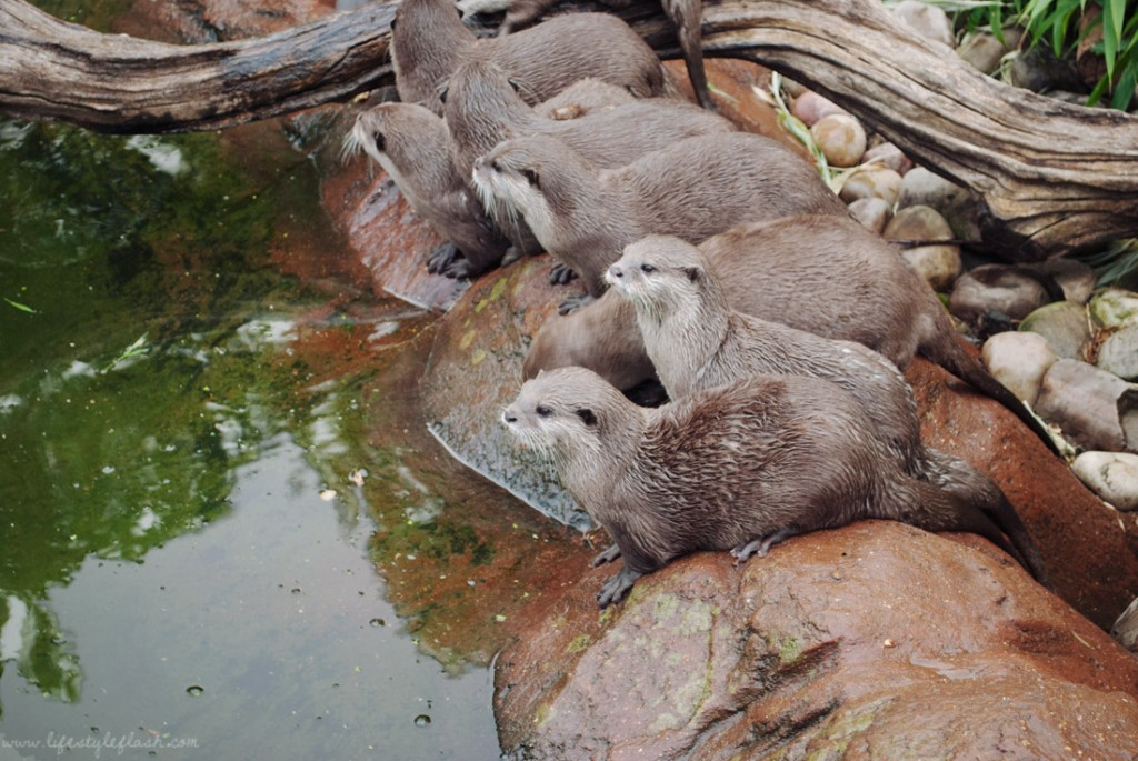 Otters at London Zoo Lates